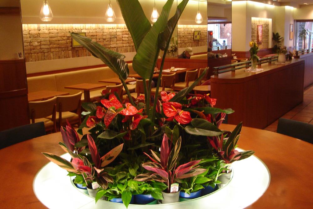 カフェのインテリア、照明に合わせたグリーンコーディネートを提案します。