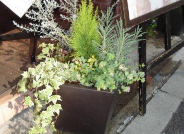 オープンテラスでお食事するお客様の足元に、さりげなく寄せ植え鉢を。いつの間にか蝶々も一緒にお迎えの準備です。