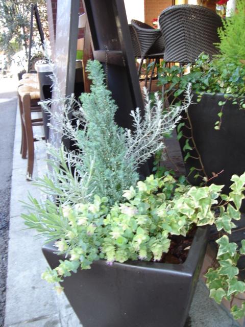 季節ごとに植え替えすると、四季折りの草花を楽しむことができます。